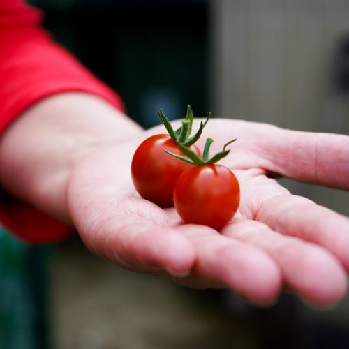 Tomato's in hand